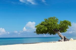 Fofoti View on Eagle Beach Aruba